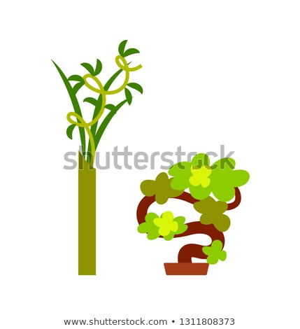 Green Plant in Vase and Small Winding Tree Vector Stock photo © robuart