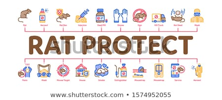 Rat Protect Minimal Infographic Banner Vector Stock photo © pikepicture