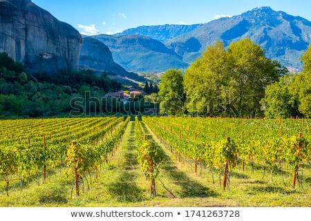 Widoku winnicy Grecja niebo górskich zielone Zdjęcia stock © borisb17