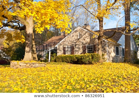 House Philadelphia Yellow Fall Autumn Leaves Tree Stock photo © Qingwa