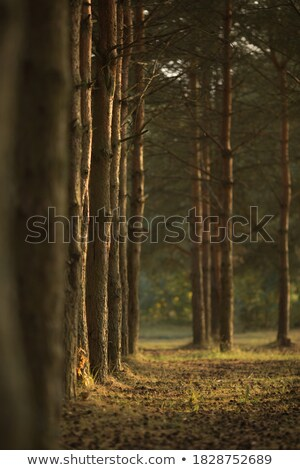 morning sunlight in vegetation Stock photo © smithore