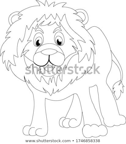 Coloring Page Lion stock photo © lenm