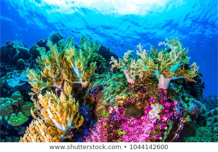 Vízalatti kilátás hal korallzátony akvárium nap Stock fotó © photocreo