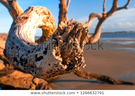 Driftwood Świt kawałek plaży niebo wody Zdjęcia stock © saje