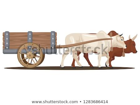 kudde · geiten · indian · boerderij · natuur · leven - stockfoto © ziprashantzi