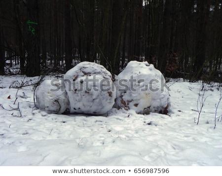 Kirli kartopu yalıtılmış beyaz su kar Stok fotoğraf © Taigi