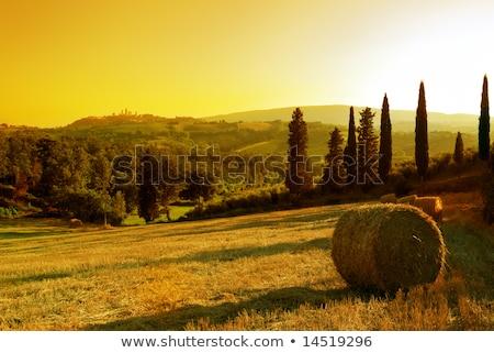 Tipikus toszkán tájkép Olaszország égbolt tavasz Stock fotó © Bertl123