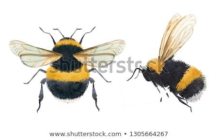 Flight of a Bumble Bee Stock photo © Roka