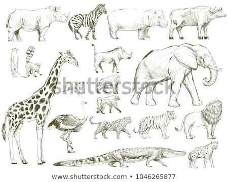 纹身素描:符号白色插图理念动物照片商业包装设计的鬣狗图片
