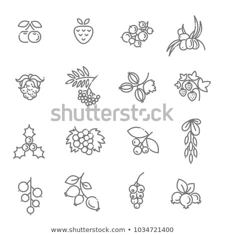 berries icon collection Stock photo © Genestro