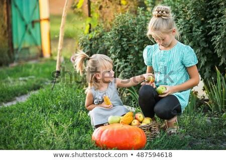 девушки корзины яблоки красивой трава Сток-фото © natalinka