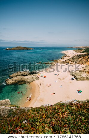 Manzara ada Portekiz plaj çiçek okyanus Stok fotoğraf © inaquim