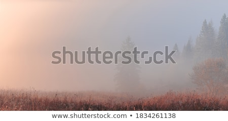 Autumn forest and fog. Stock photo © d13