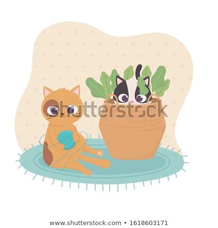 子猫 · 演奏 · ボール · ウール · 赤 · アームチェア - ストックフォト © mkucova