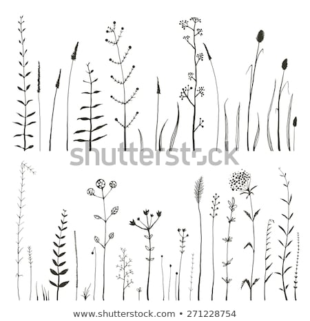 doodle tender Nature background with grass and flowers Stock photo © Elmiko