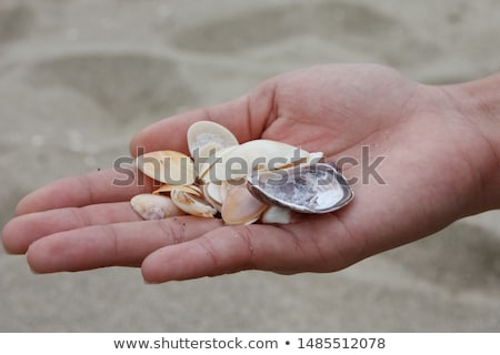 Girl Holding Starfish Found On Beach Stock photo © monkey_business