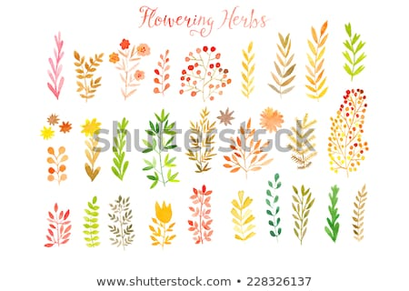 orange watercolor painted vector rowan tree leaf stock photo © gladiolus