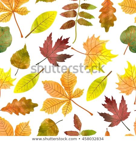 orange watercolor painted vector chestnut leaf stock photo © gladiolus