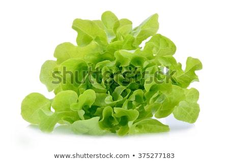 Fresh hydroponic green oak vegetable Stock photo © nalinratphi
