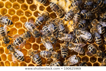 Stockfoto: Macro Shot Of Bees Swarming On A Honeycomb