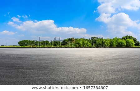 forest in sunny day stock photo © oleksandro
