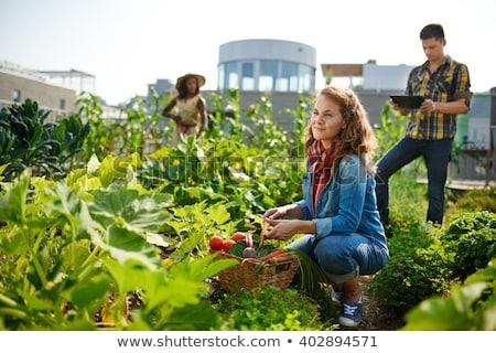 Boldog barátok kertészkedés közösség napos idő természet Stock fotó © wavebreak_media