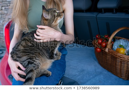 Young woman and cat on a trunk Stock photo © konradbak