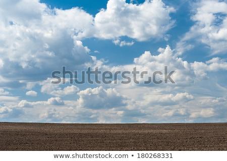 campo · primavera · grama · paisagem · verão · azul - foto stock © alinamd