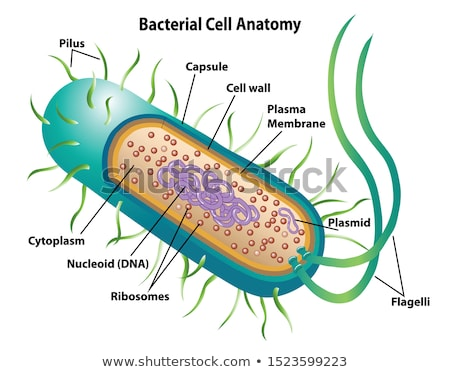 bacteria cell stock photo © bluering