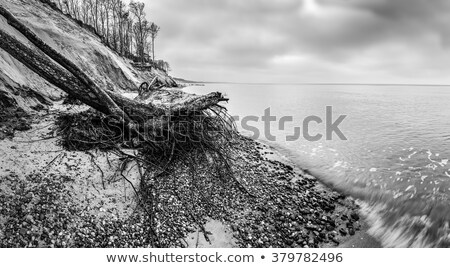 Wild beach with fallen tree and cliffs on winter, cloudy day. Waves on the sea. Stock photo © photocreo