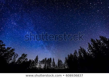 deep night sky with many stars and forest stock photo © karandaev