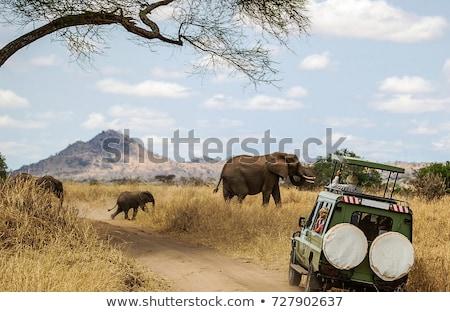 слон · Safari · Африка · смотрят · Ботсвана - Сток-фото © thp