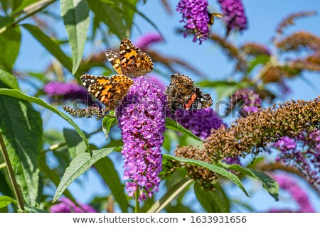 Bush fleurs insectes illustration fond art Photo stock © bluering