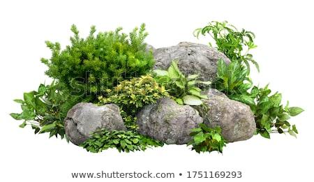 Rocha verde arbusto ilustração fundo arte Foto stock © bluering