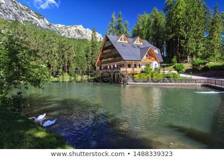 small lake in val badia stock photo © antonio-s