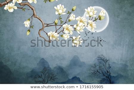 Magnólia flores completo florescer primavera árvores Foto stock © Klinker