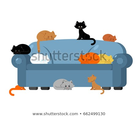 Many Cats on couch. kittens on sofa. Furniture cat lady  Stock photo © popaukropa
