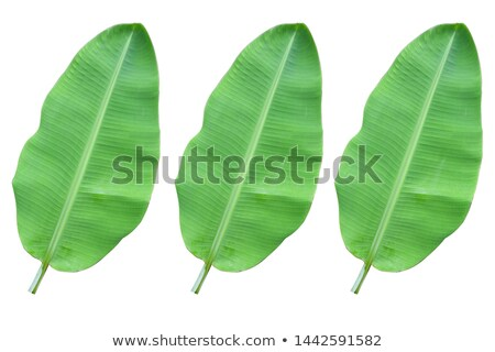 Tropical design with colorful palm leaves and plants on white ba Stock photo © BlueLela