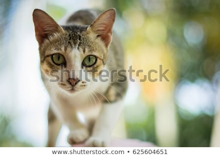 dormir · chat · bon · yeux · fond - photo stock © simply
