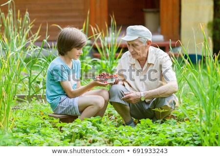Nagyapa unoka eper étel jókedv eszik Stock fotó © IS2