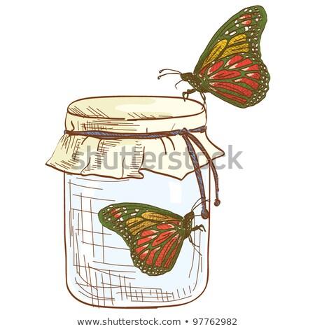 Twee vlinders glas jar vlinder natuur Stockfoto © IS2