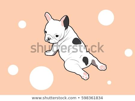 Francia bulldog kutyakölyök diéta vicces izolált Stock fotó © hsfelix