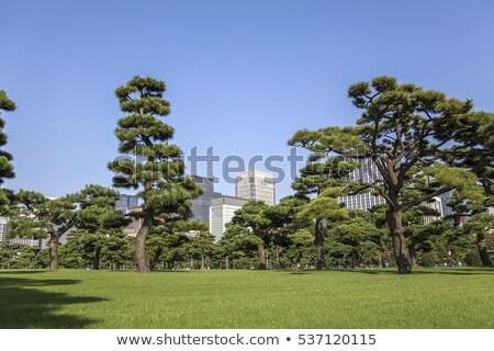 Piękna zielone parku ogród Japonia Zdjęcia stock © boggy