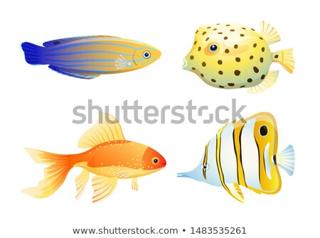 Butterfly fish and blue striped tamarin wrasse Stock photo © robuart
