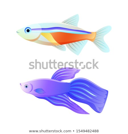 Stock photo: Common and Rare Aquarium Fish Illustration Set