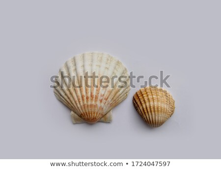 Сток-фото: Small Brown Snail With Round Shell Colorful Poster