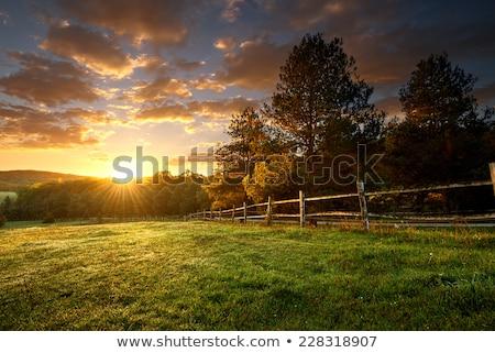 Farm mező festői tájkép északnyugat USA Stock fotó © iriana88w