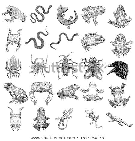 Fuera cucaracha ilustración estudiante fondo Foto stock © bluering