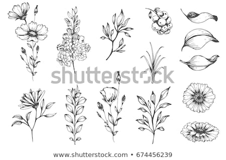 Set of branches and flowers. Hand drawn black ink isolated floral decorative elements. Herb silhouet Stock photo © ESSL