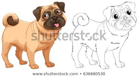 Doodles drafting animal for little dog Stock photo © colematt